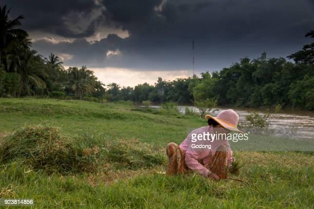 Khmer woman cutting grass Battambang Cambodia