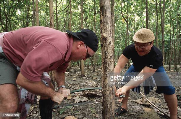 Khun Boonchai Bencharongkul managing director of DTAC mobile phone company cutting a down a tree with a fellow company executive on his land in...