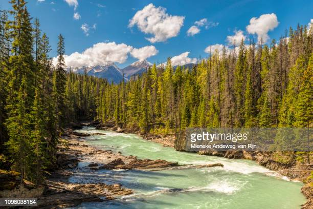 Kicking Horse River in Yoho National Park, British Columbia, Canada, North America