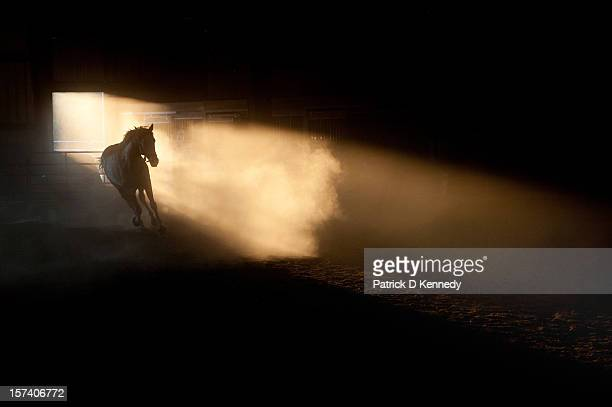 kicking up a dust storm - cheval photos et images de collection