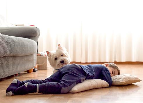 kid, 3 years, sleeping on the floor and his westie - gettyimageskorea