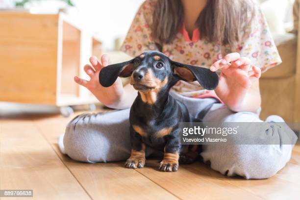 kid and dachshund puppy - teckel stock photos and pictures