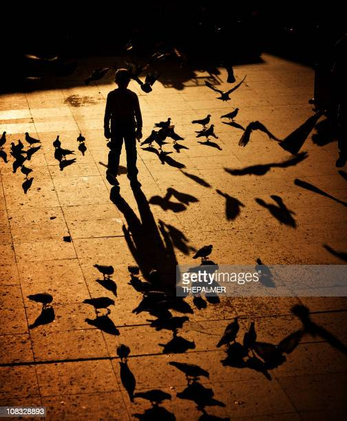 kid chasing pigeons - one boy only stock pictures, royalty-free photos & images
