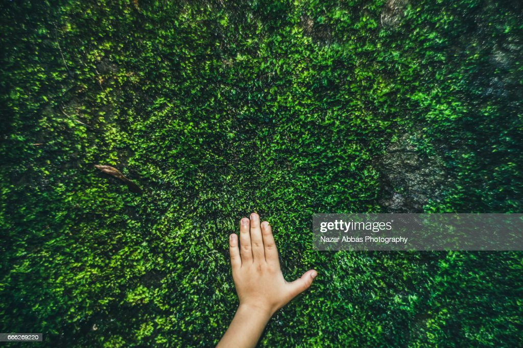 Kid Hand On Moss. : Stock Photo