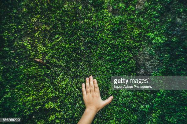 kid hand on moss. - moss stock pictures, royalty-free photos & images