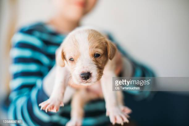 kid holding a puppy - adoption stock pictures, royalty-free photos & images