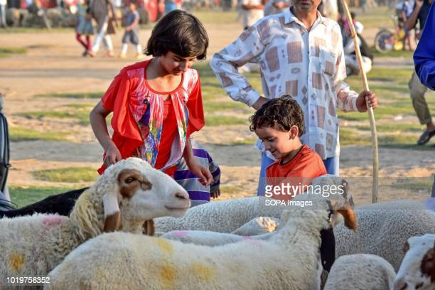 A kid inspects a sheep at a livestock market ahead of the Muslim festival Eid alAdha Muslims across the world are preparing to celebrate the annual...