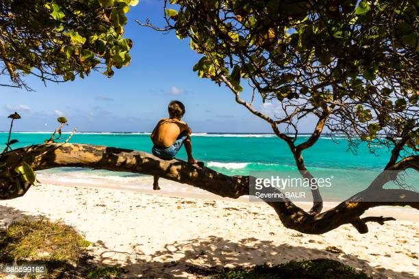 a kid on a tree looking at the sea, capesterre, marie-galante, guadeloupe, france - guadeloupe photos et images de collection