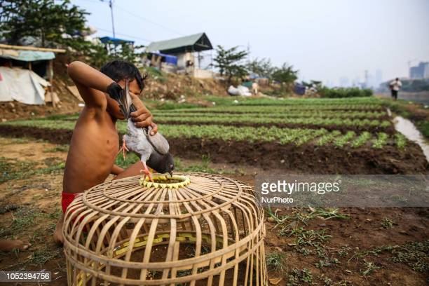 A kid play with pigeons near a vegetable field in Jakarta Indonesia on Wednesday October 17 2018