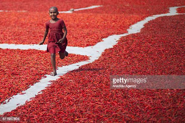 A kid plays game as women process and dry red chili pepper under sun near Jamuna river 240 kms northwest of Dhaka in Gaibandha Bangladesh on February...