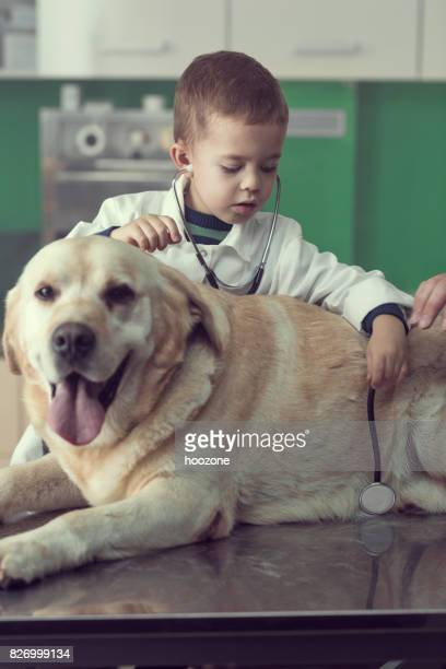 Kid veterinarian and Labrador