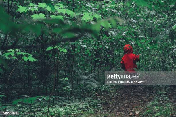 Kid Walking Amidst Plants At Forest
