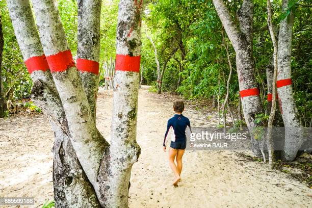 A kid walking among manchineel, a toxic tree marked with a red line, Anse Mabouya, Sainte-Luce, Martinique, France