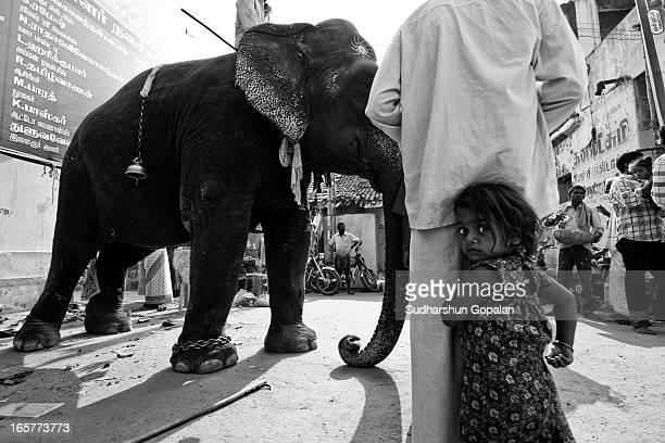 Kid was afraid of elephant and stood behind her father, shot at Kaveripattinam, India