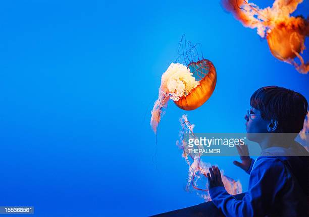 kid watching jellyfish at the aquarium