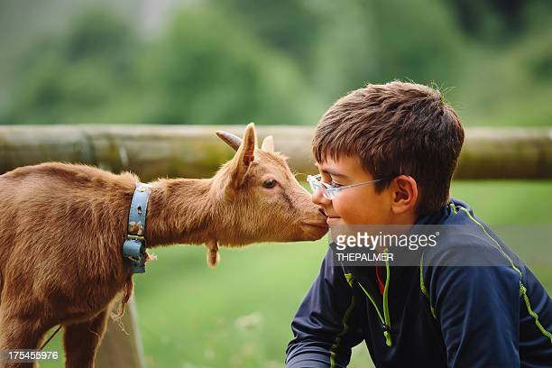 kid with baby goat - livestock stock pictures, royalty-free photos & images