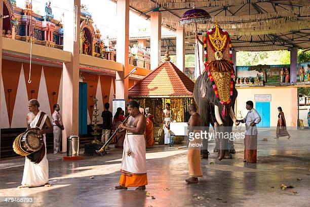 kidangamparampu temple - kerala elephants stock pictures, royalty-free photos & images
