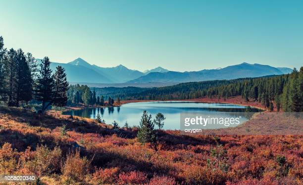 kidelu lake and autumn forest in altai, russia - シベリア ストックフォトと画像
