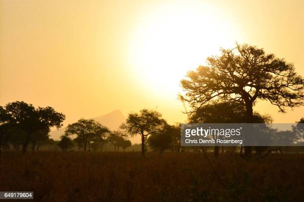 kidepo at dawn. - uganda stock pictures, royalty-free photos & images