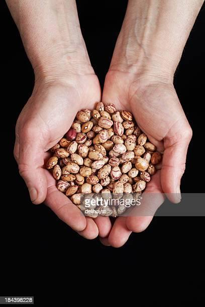 インゲン豆の手