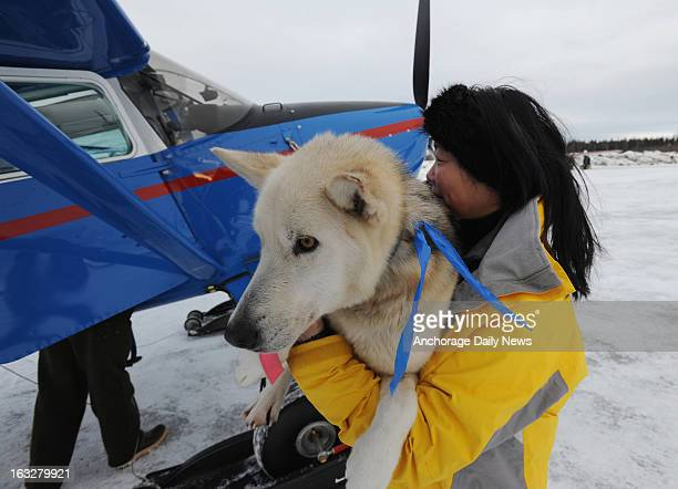 Kidron Flynn of Minnesota carries a dropped dog to an Iditarod Air Force plane at Nikolai Alaska airport on Wednesday March 6 during the Iditarod Dog...