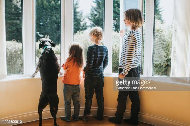 kids and dog, looking out of a window - lockdown stock pictures, royalty-free photos & images