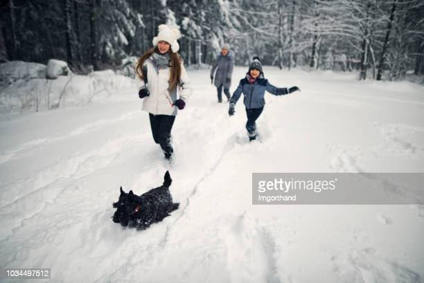 kids and grandmother running with dog in winter forest - canine stock pictures, royalty-free photos & images