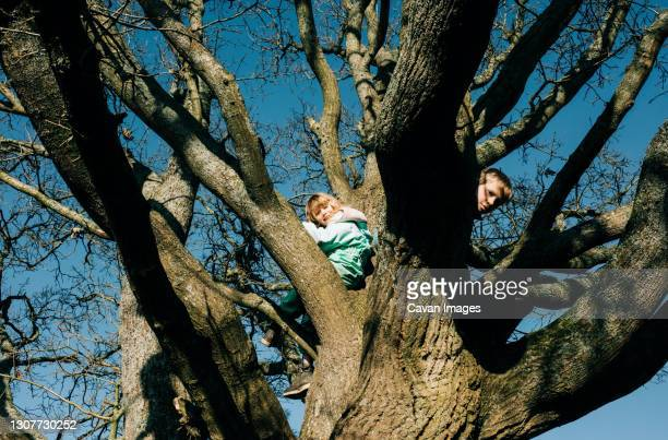 kids climbing a huge tree together in the sunshine in england - exploration stock pictures, royalty-free photos & images