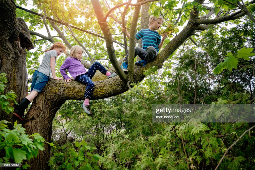 Kids climbing very high tree in sprintime. : Stock Photo