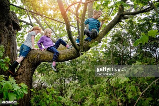 Kids climbing very high tree in sprintime.