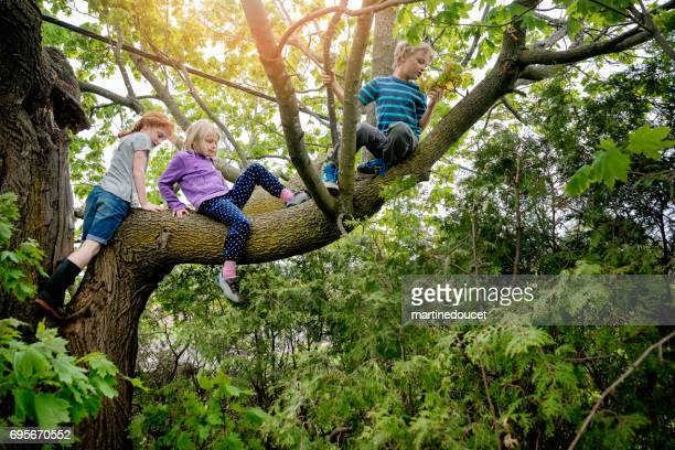 kids climbing very high tree in sprintime. - climbing stock pictures, royalty-free photos & images