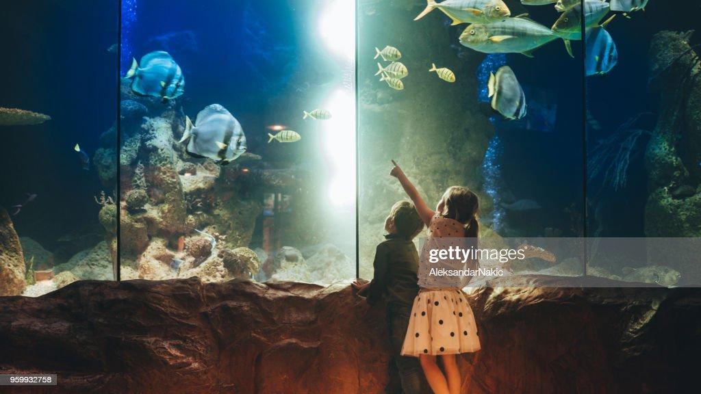 Kids discovering underwater world : Stock Photo