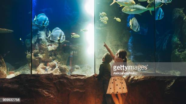 kids discovering underwater world - museum stock pictures, royalty-free photos & images