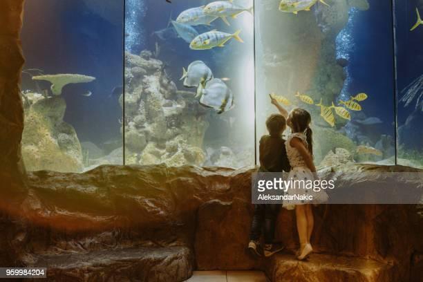 kinderen ontdekken onderwaterwereld - dierentuin stockfoto's en -beelden