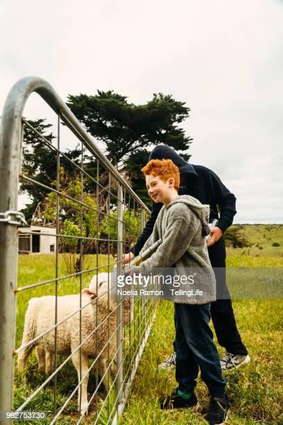 Kids feeding lambs in the country Victoria, Australia