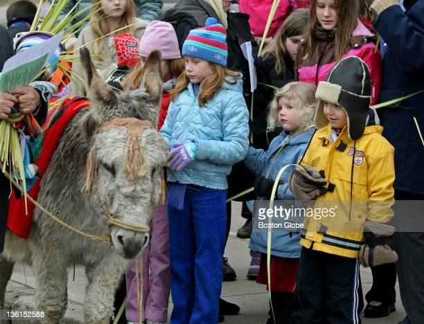 Kids get close to Chester the gray donkey , who once again led the Palm Sunday procession down College Avenue to Davis Square. Annual service is...