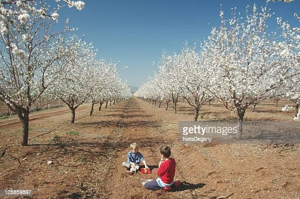 kids in Almond plantation