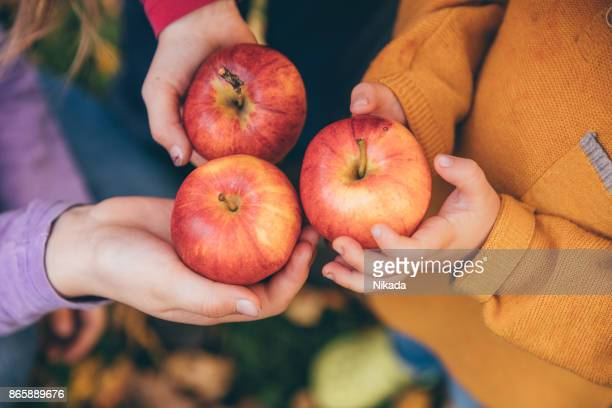 kids in an orchard holding red apples - organic farm stock pictures, royalty-free photos & images