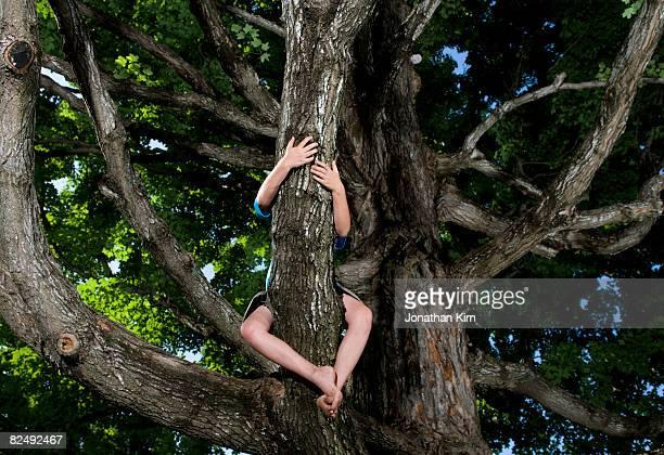 Kids in Maple Tree
