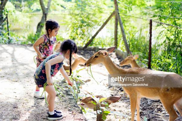 kids in the zoo