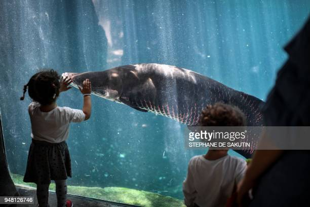 Kids interact with a fish in the Great Glasshouse on April 18 2018 at the Parc Zoologique de Paris or Zoo de Vincennes part of the Musee National...