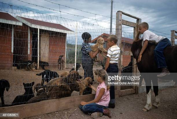 Kids look and pet puppies at a local dog pound in Rapid City South Dakota