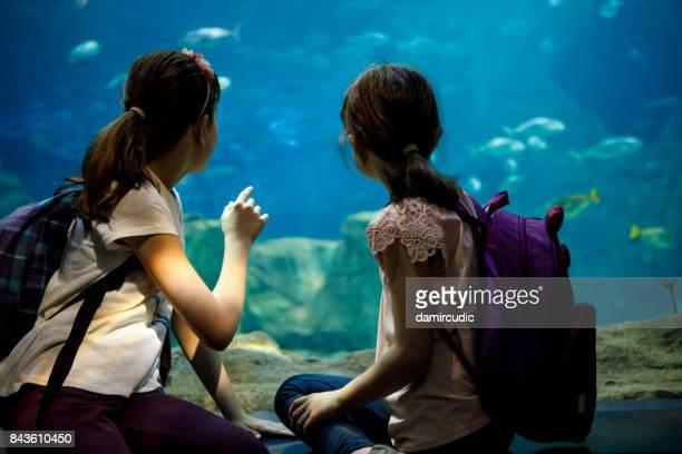 Enfants qui cherchent à poisson dans un grand aquarium