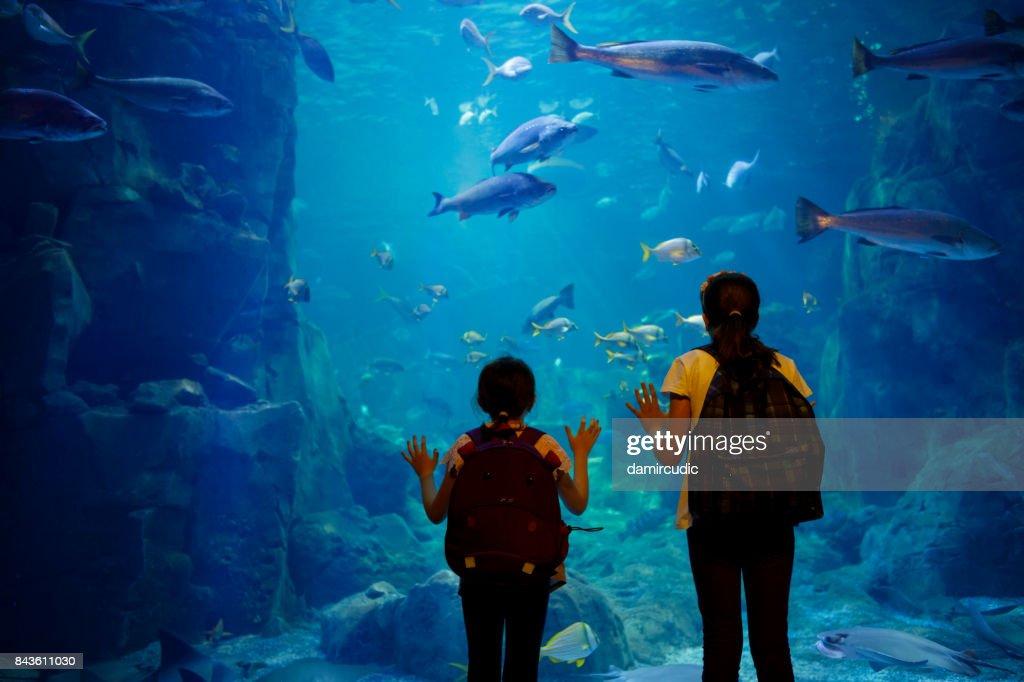 Kids looking at fish in a big aquarium : Stock Photo