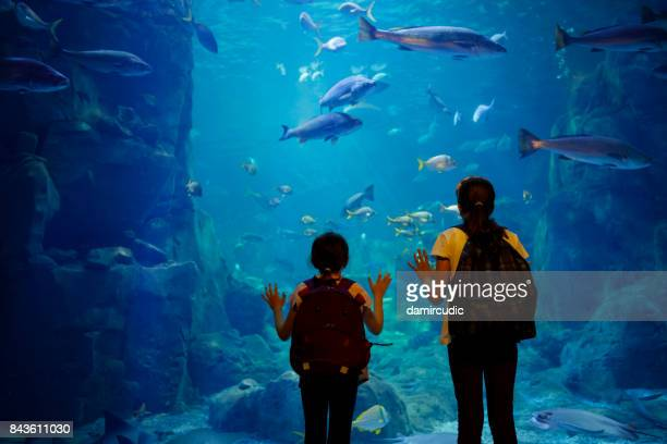 kids looking at fish in a big aquarium - zoo stock pictures, royalty-free photos & images