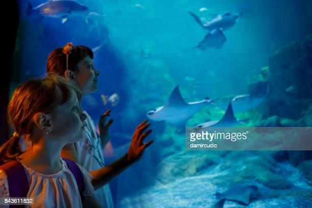 kinderen kijken naar vis in een groot aquarium - dierentuin stockfoto's en -beelden