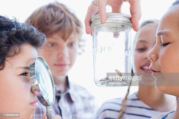kids looking at insects in jar with magnifying glass - invertebrate stock photos and pictures