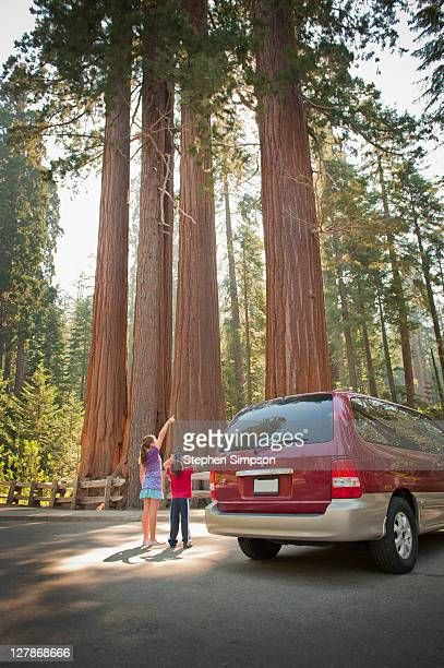 kids looking up gigantic trees with binoculars - short skirts in cars stock photos and pictures
