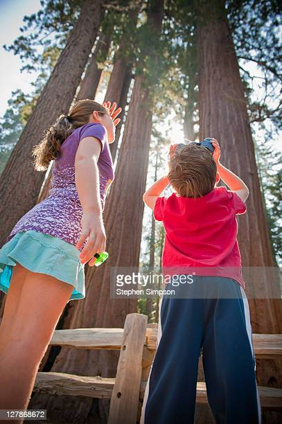 kids looking up gigantic trees with binoculars - little girls up skirt fotografías e imágenes de stock