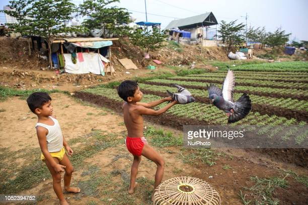 Kids play with pigeons near a vegetable field in Jakarta Indonesia on Wednesday October 17 2018